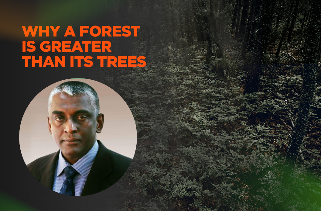 Why a forest is greater than its trees - 48 mins