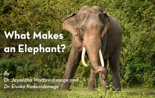 What Makes an Elephant? : Dr. Jayantha Wattavidanage and Dr. Enoka Kudavidanage