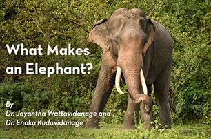 What Makes an Elephant? : Dr. Jayantha Wattavidanage and Dr. Enoka Kudavidanage