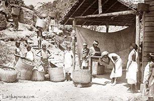 1872 – Sri Lanka's First Tea Estate Begins Work